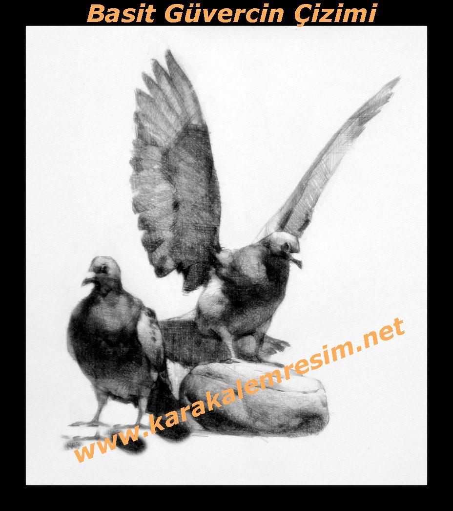 Karakalem basit güvercin çizimlerihayvan çizimleri içinde en kolay çalışmadır güvercin çeşitleribakımı yapan insanların ruh hal