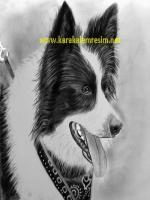 karakalem köpek çizimleri k9 çoban alman kurdu tazı kaplan aslan golden retrover çalışmaları bunun dışında maymun zebra eşşek sincap kuş türlerinin çizimleride yapılabilir hayvan çizimleri portrelerden daha kolaydır