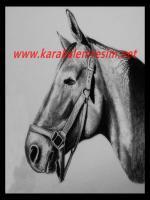 Karakalem at çizimi,çizimleri,çalışmasına bir örnek ,yan profil beyaz at örneği,çok yakın zaman eşek ve zebra çizimide eklicem,