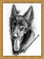 E karakalemde uzun saçlı köpeğe örnek bir çalışma süs köpekleri çizimleri için daha fala örnek için anasayfayı tıklayınız amatör resim çizenler sevenler öğrenmek isteyenler kaybak arıyanlar ingilizce fransızca almanca çokca örnek kitap var türkçeye çevir