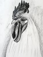 karakalem tavuk horoz çizimleri portresi çalışmalrı örnekleri galerisi en iyi çizen ressamı kümes yumurta kırık sepette siyah beyaz masada iskemle kirlangic-calikusu pağagan cennet kusu tavuz tüy kizilderili kovboy cov western wandet cizimi