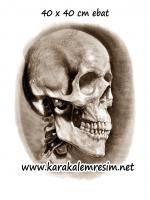 karakalem çizilmiş kuru kafa resimleri,anatomik çizimlere örnekler,çizim teknikleri,kemiklerin birebir çizilmesi,biyoloji,dersi ödevleri,kafatası çizilmiş örnekleri