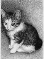 karakalem pissik çizimi ,kedi çizimleri hayvan resimleri içinde en kolayıdır sadece bıyık kısmına biraz dikkat edilirse yeterlidir.bu çizimde fabriano bristol kağıt kullandım, Fabriano bristol kağıt sadece kalemle çizimler için idealdir ama dezavantajıda