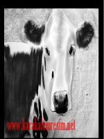 karakalem inek portresi çalışması çizimi sergisi charcoal drawing cow sipariş reklam için tasarım